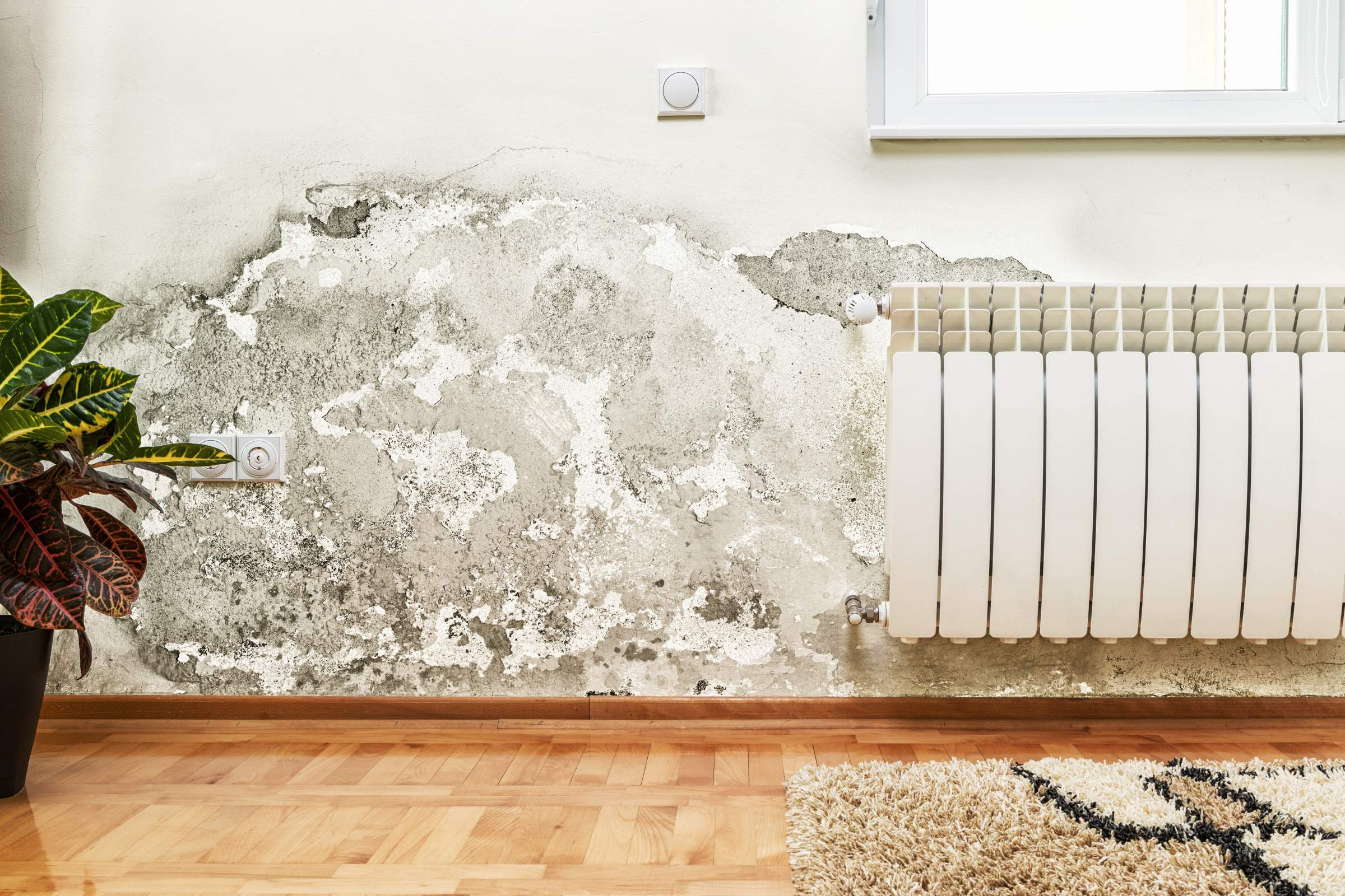mold-sleep-width2400height1600